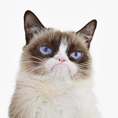 Do you think you're a cat whisperer? Think you have a way with the kitties? Well not until you've encountered Grumpy Cat! Find out if you'd even have a chance being friends with this frowning feline.
